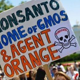 Cientos de ciudades en marcha mundial contra Monsanto